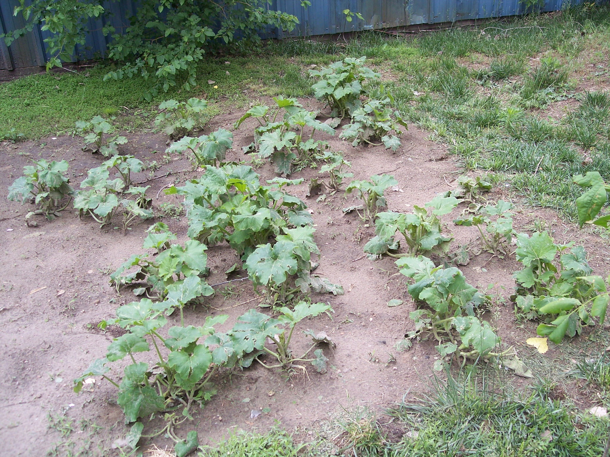 Pumpkin Patch Central day 40