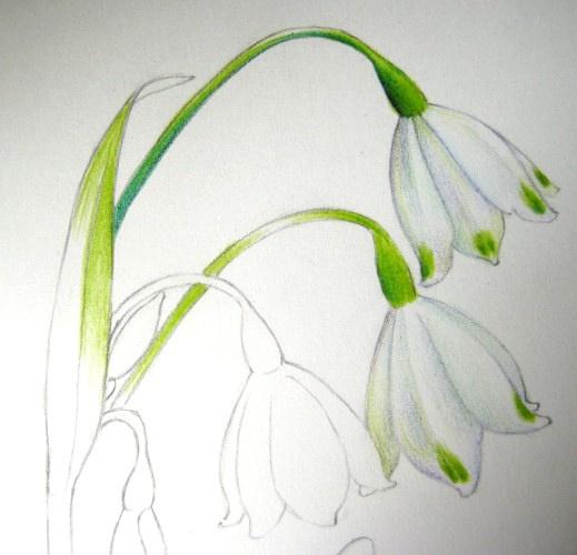 彩铅手绘树叶图片大全_彩铅手绘树叶图集分享